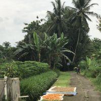 nu1-indie-landbouw.jpg