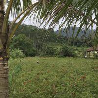nu1-landbouw8.jpg